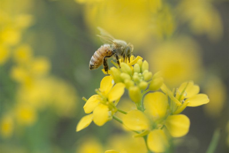 Neonicotinoids May Harm Wild Bees