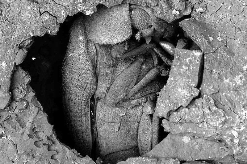 mummified bug