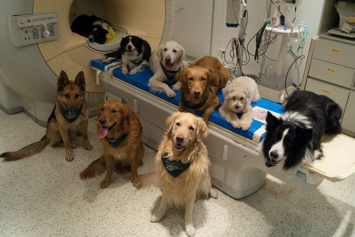 A variety of dogs that were trained to sit still so they could have their brains scanned