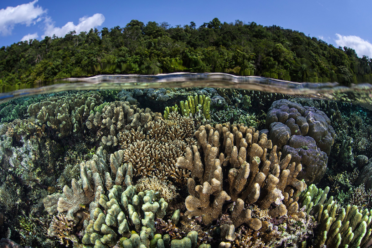 Corals with forest visible above sea surface
