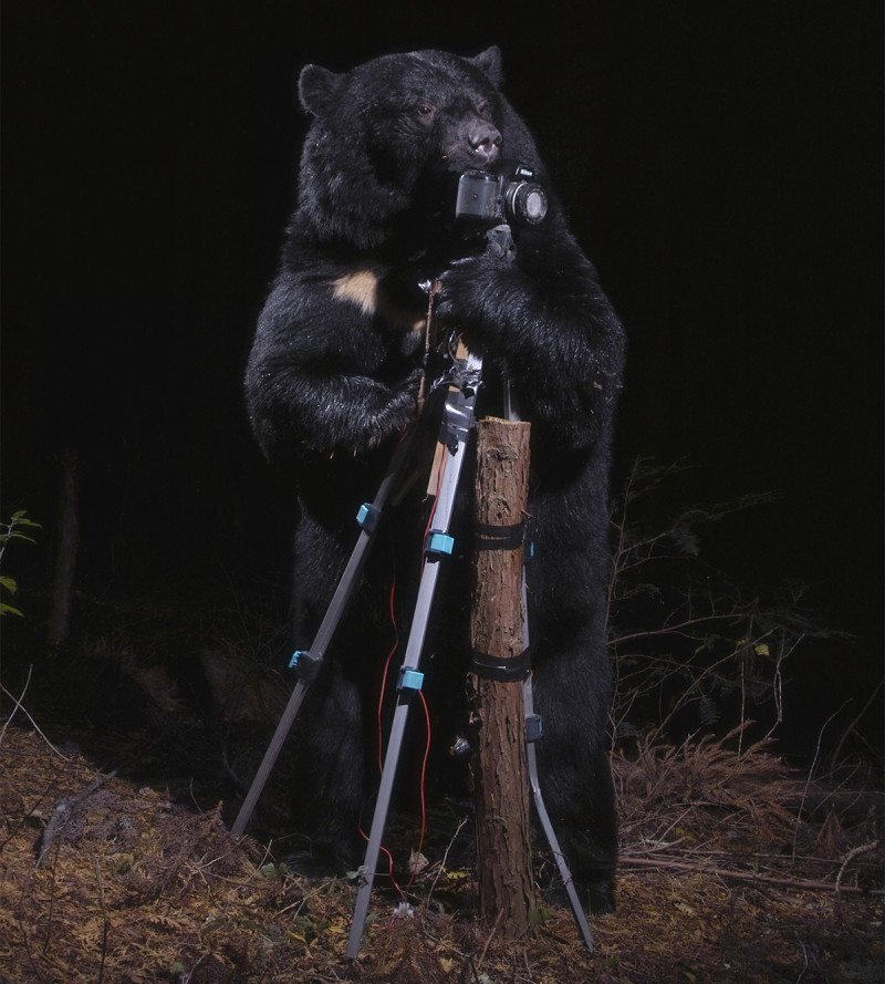 A-black-bear-plays-with-the-Camera,-Nagano,-2006---Crédit-photo-Manabu-Miyazaki