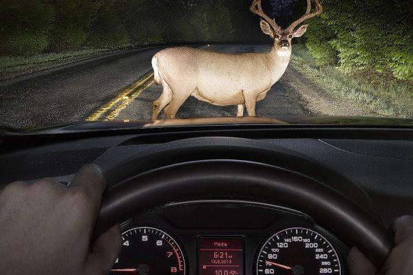 deer seen through car window