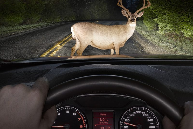 deer seen through car window