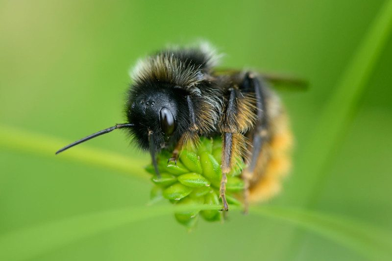 A close-up of a bee perched on the stem of a plant