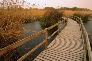 A bridge in a marshy landscape extends into the distance where reeds and grasses can be seen