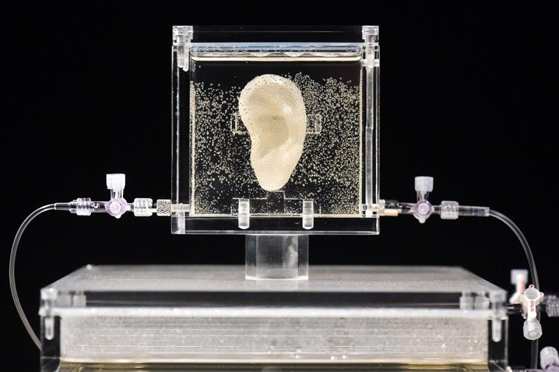 An ear suspended in some clear material between two clear sheets sits on top of a display stand