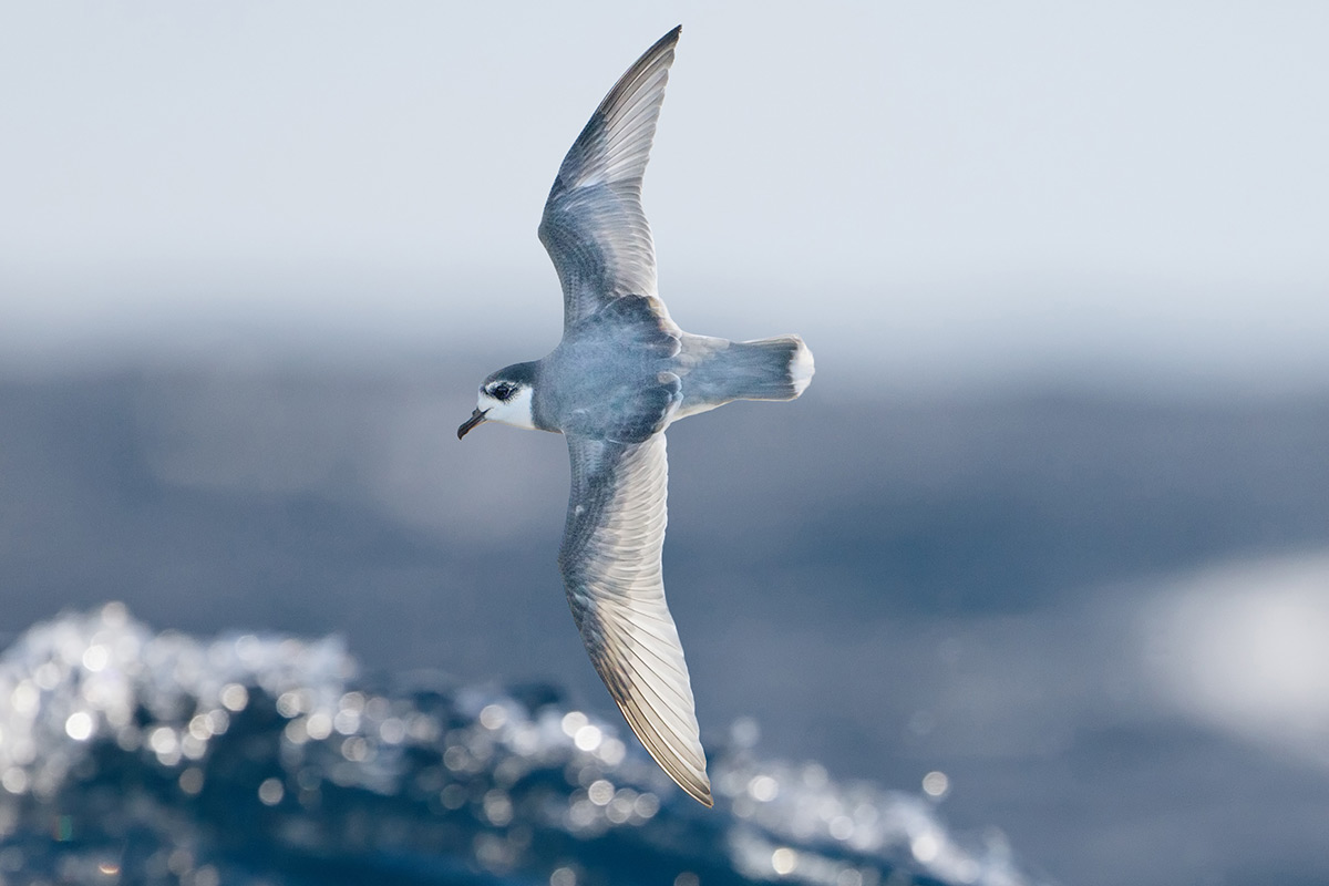 Why Seabirds Love To Gobble Plastic Floating In The Ocean