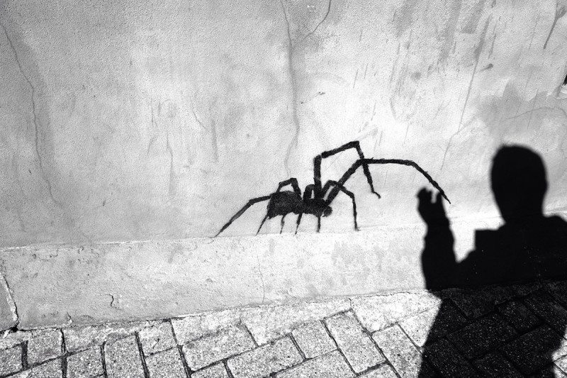 spider shadow