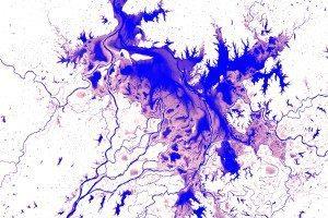 Sprawling purple pattern showing water in Poyang Lake in China