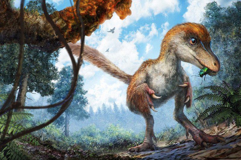De veren zijn van een dinosaurus, niet van een vogel