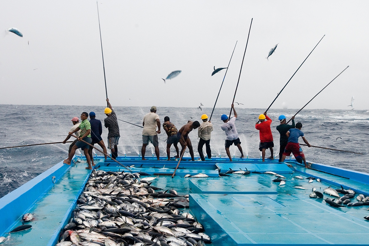 Sustainable tuna fishing is bad for climate here 39 s why for What is commercial fishing