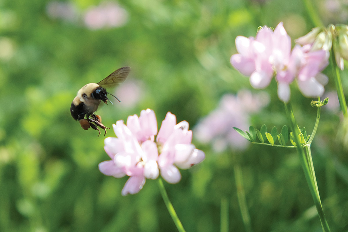 Maths explains how bees can stay airborne with such tiny wings