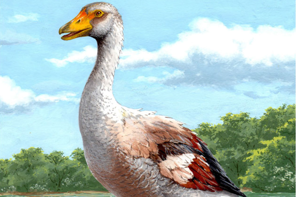 Illustration of goose against wooded backdrop