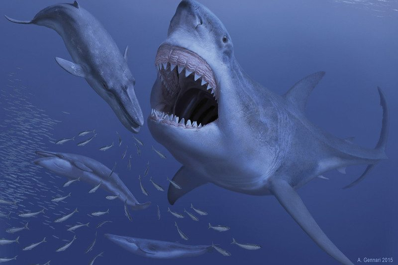Largest Ever Shark Was Doomed By Its Taste For Dwarf Whales