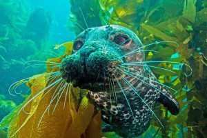 A harbour seal