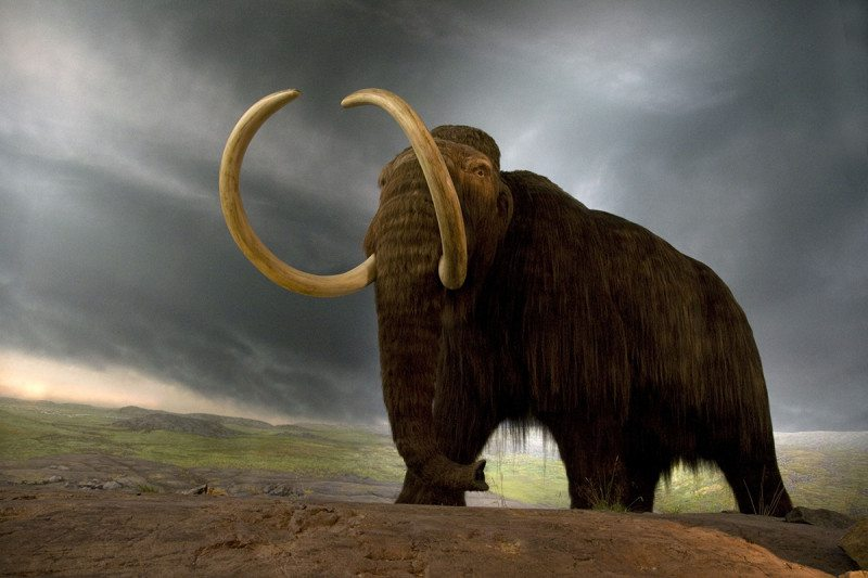 Woolly mammoth 2.0 could be walking the Earth within 10 years
