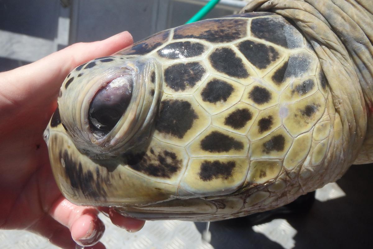 A turtle's eye