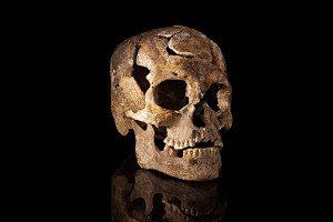 Single, somewhat damaged skull