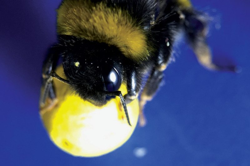 bee with ball