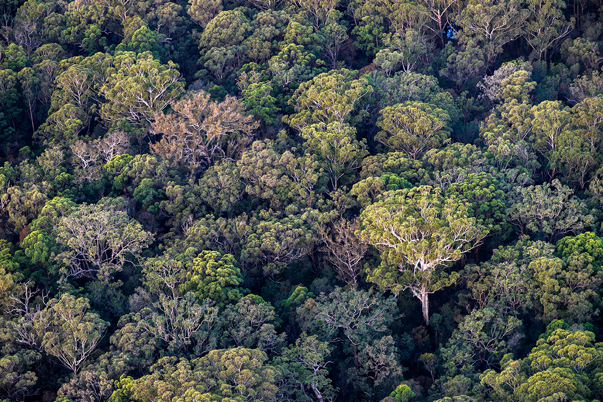 Australian forest from the air