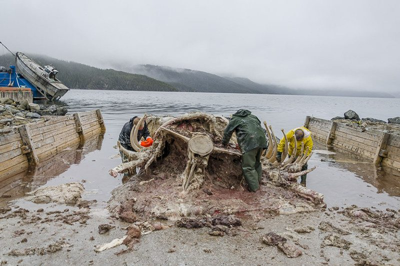 People around the remains of a whale carcass on a beach
