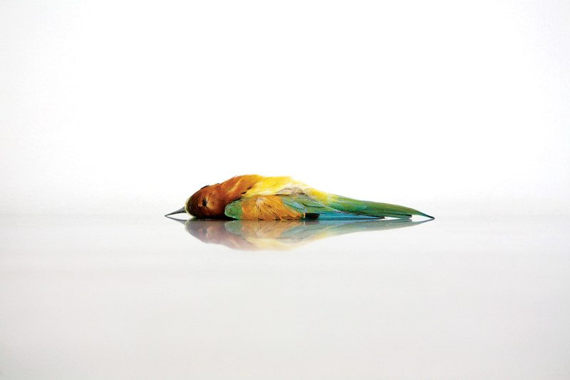 bird 1