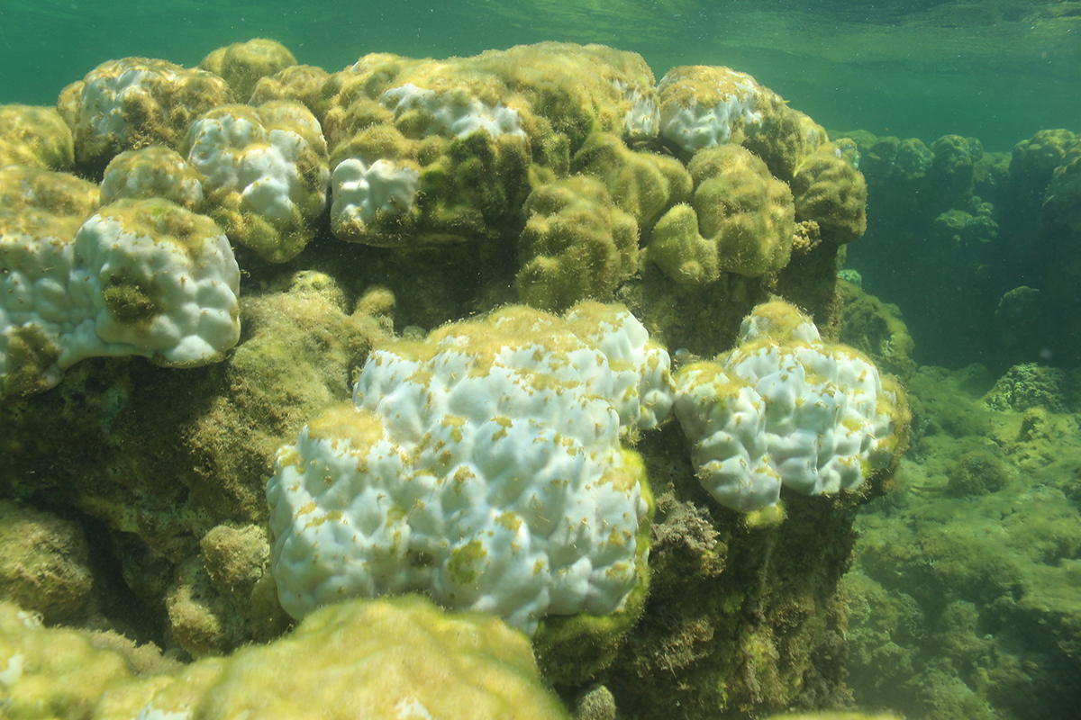 40 per cent of the coral had died