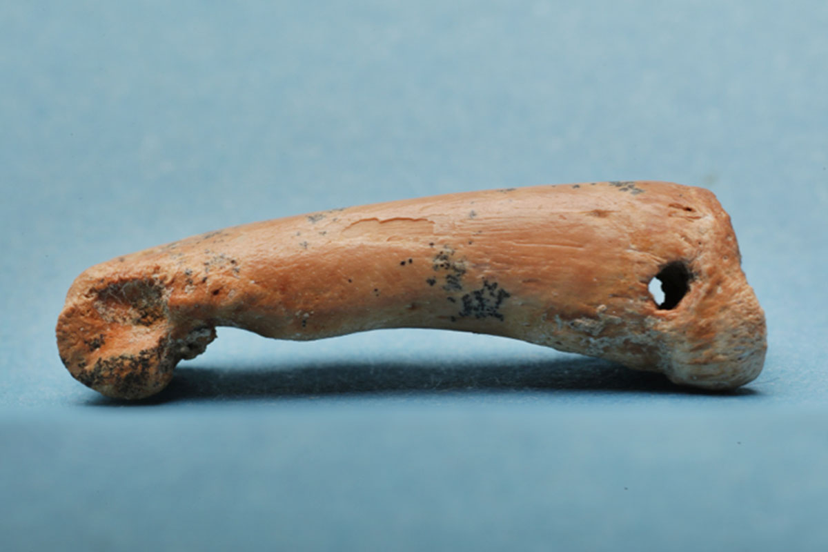 Prehistoric humans made jewellery out of exotic island animals