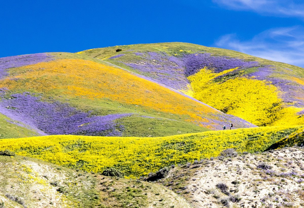 Record rains brought stunning superblooms to California