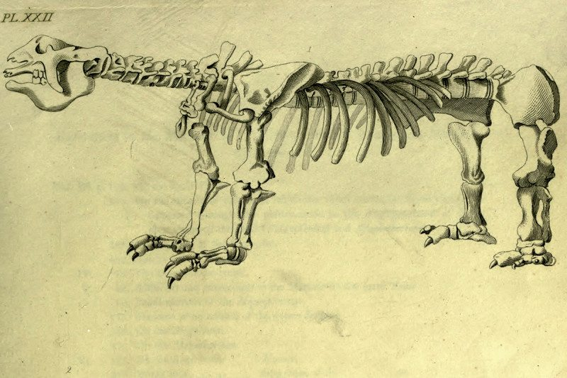 Megatherium fossil
