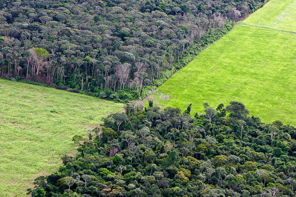 deforestation in brazil essay Disclaimer: this essay has been submitted by a student this research paper is going to talk about the causes and effects of deforestation around the world.