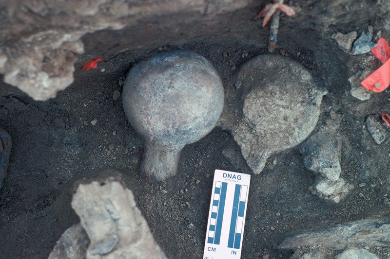 A view of two mastodon femur balls, one faced up and once faced down. Neural spine of a vertebra exposed (lower right) and a broken rib (lower left).