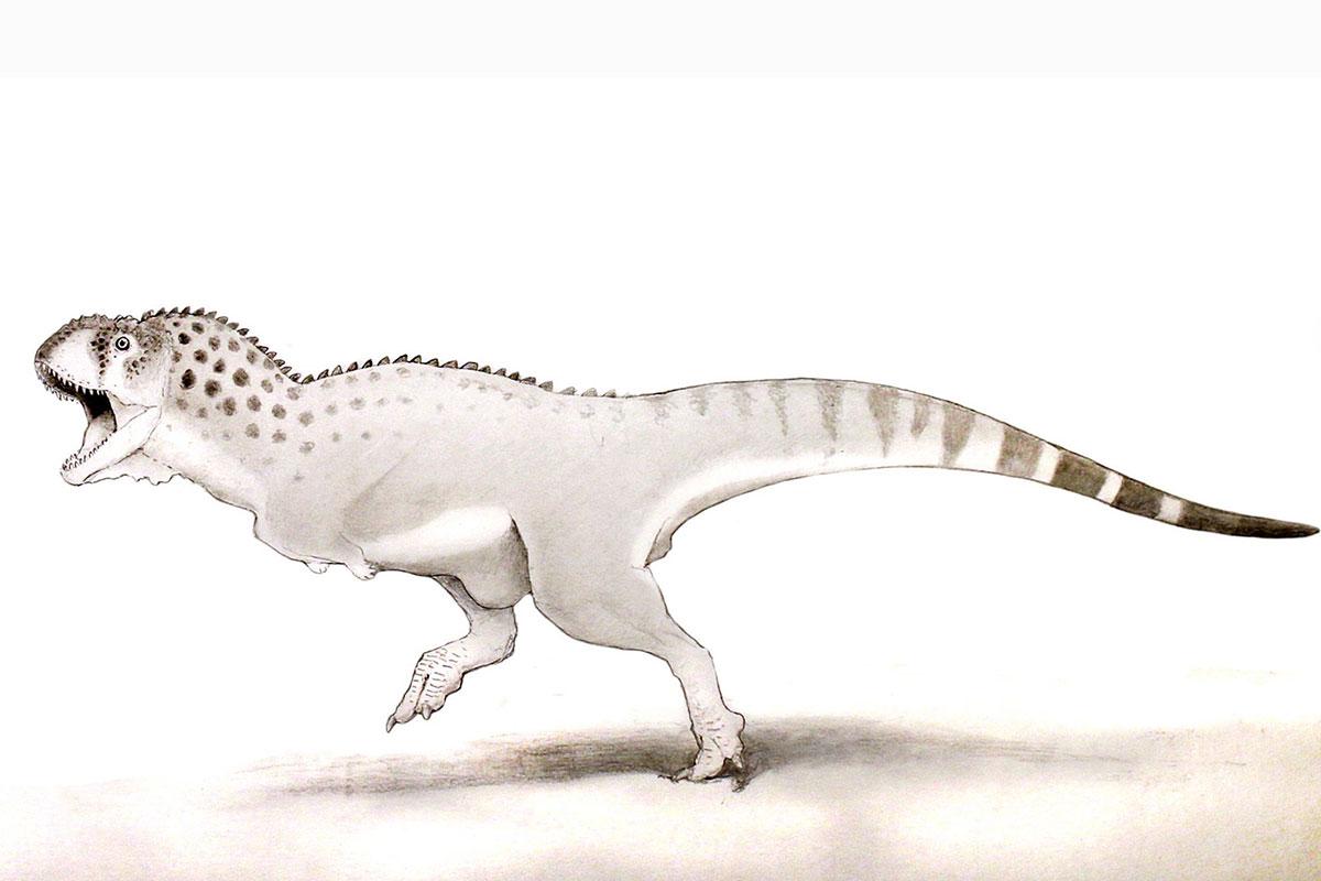 Africa's T. rex