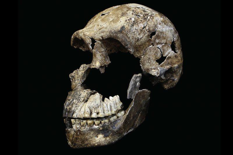 """Neo"" skull of Homo naledi from the Lesedi Chamber."