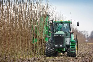Tractor cutting down biomass