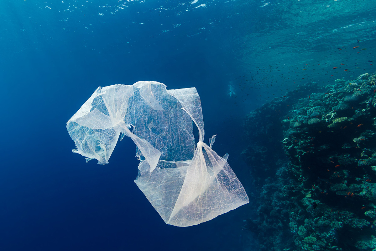 newly evolved microbes may be breaking down ocean plastics new
