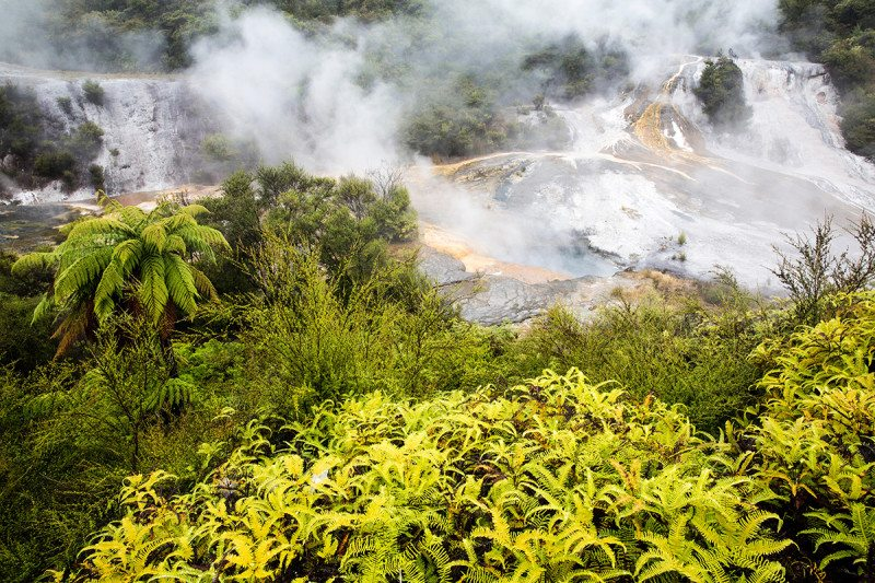 Extreme plants thrive at 72°C in New Zealand's hot volcanic soil