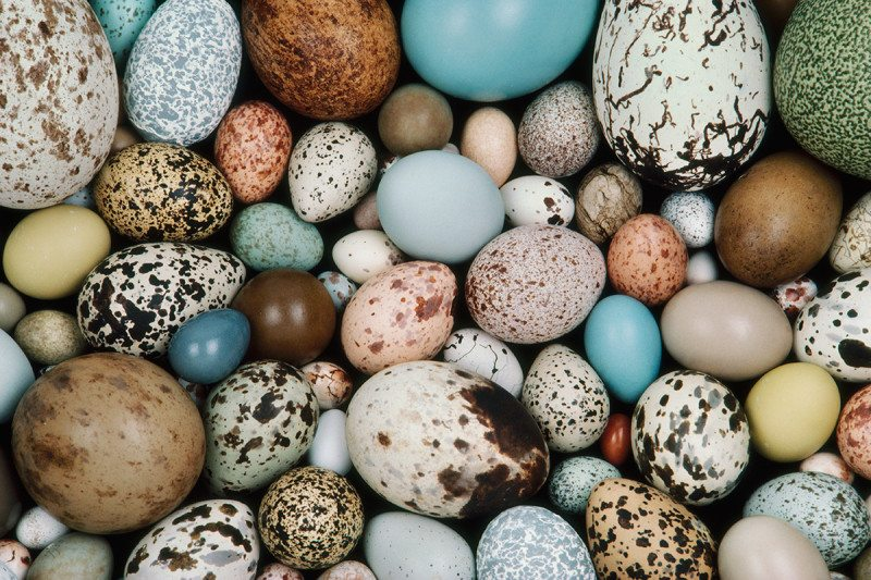 eggs of different sizes and colours