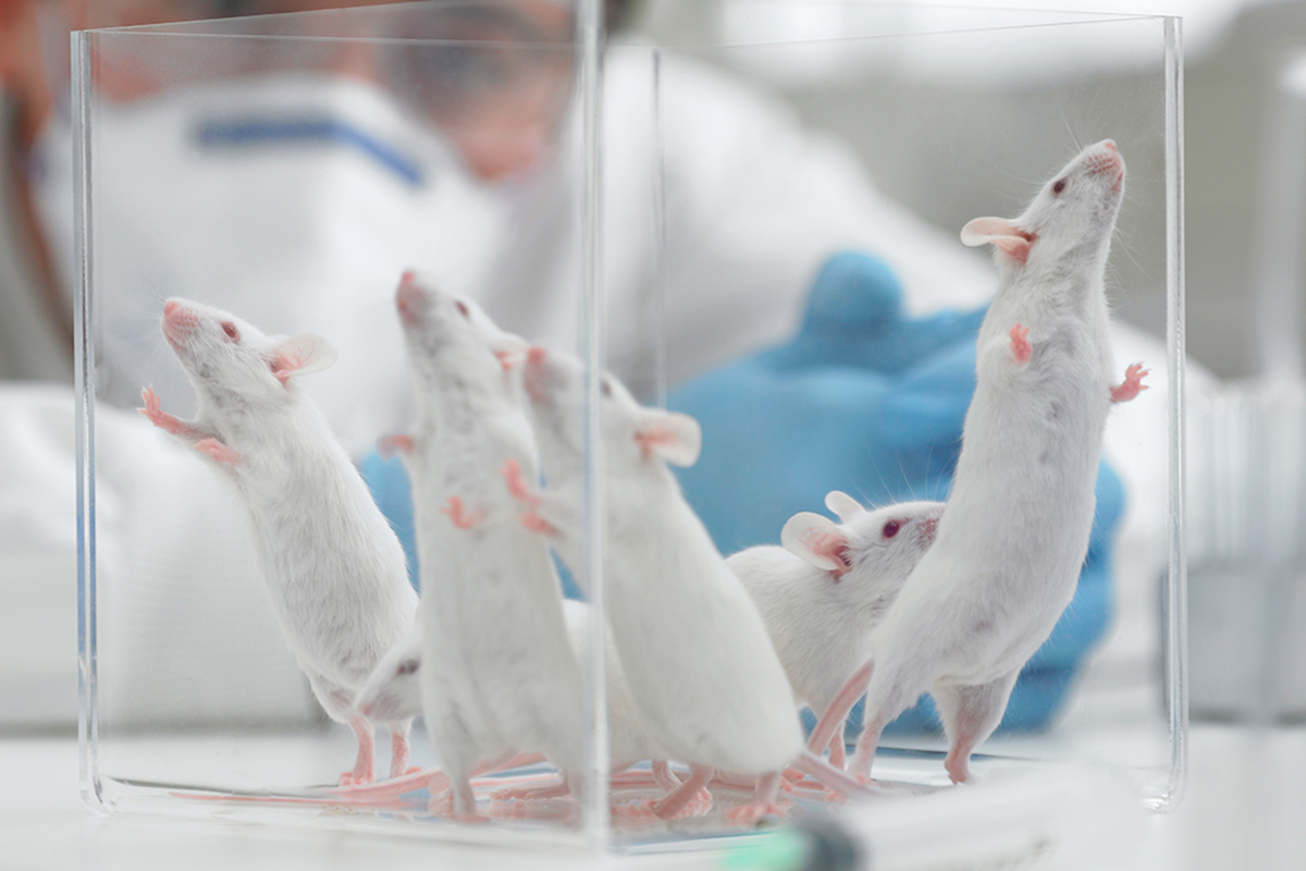 Research on male animals prevents women from getting best drugs