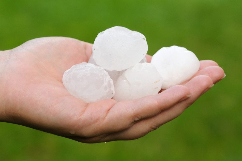 A handful of golf-ball-sized hailstones