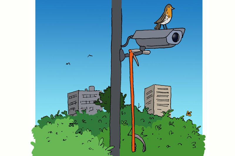 CCTV cartoon