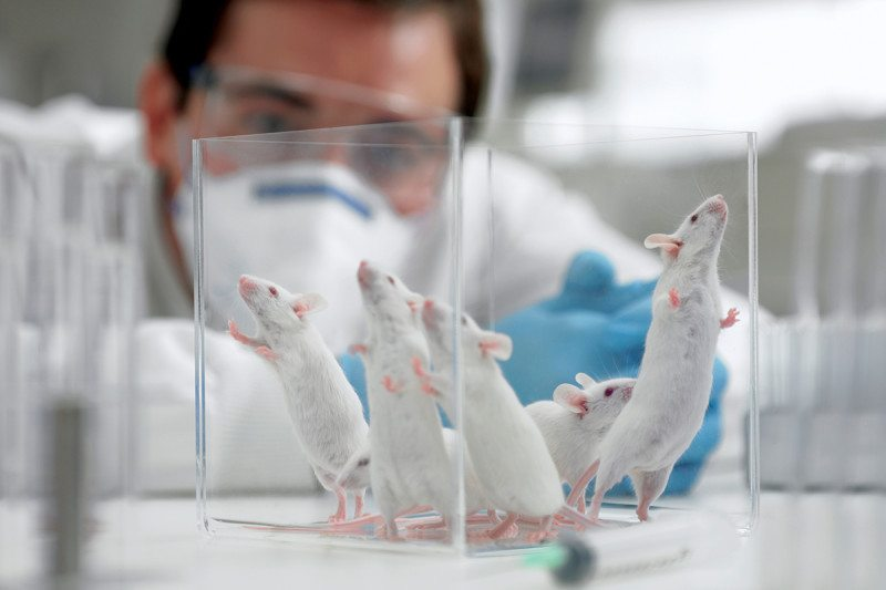 mice in lab