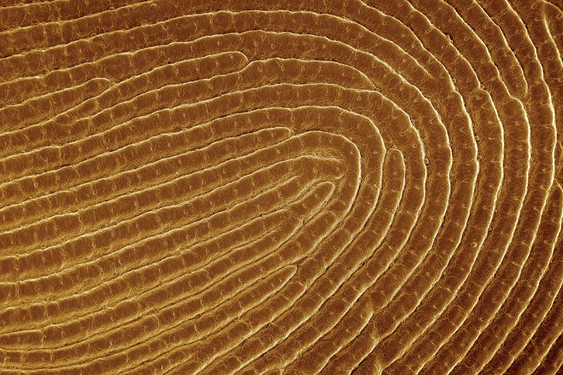 Close-up of a fingerprint