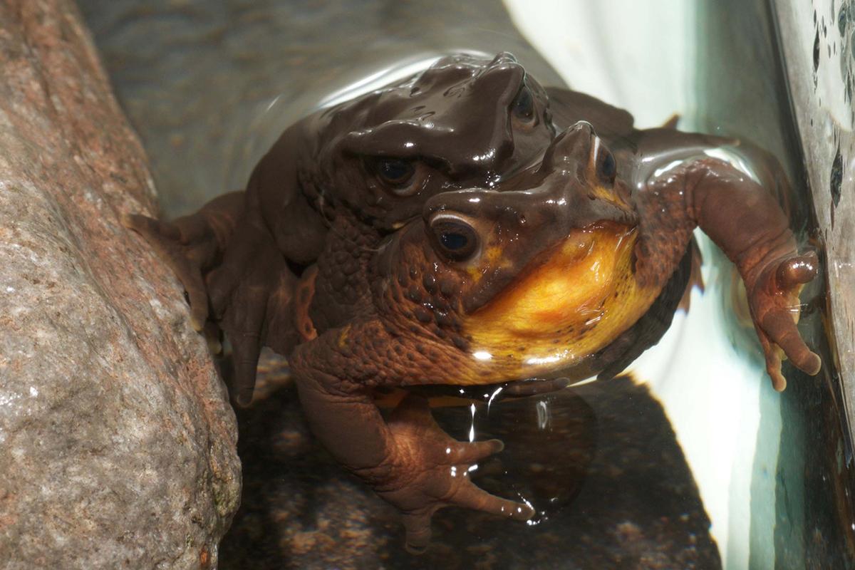 boy finds u0027extinct u0027 frog in ecuador and helps revive species new
