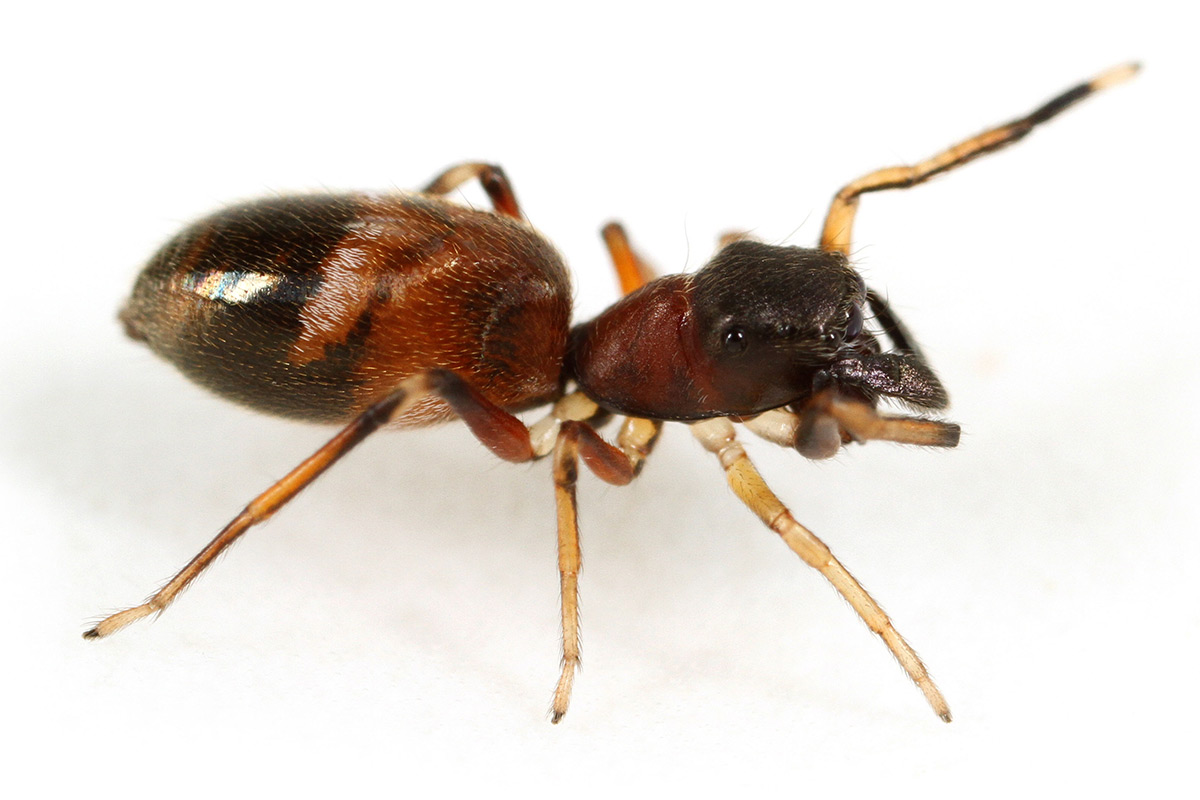 How Fast Can An Ant Travel