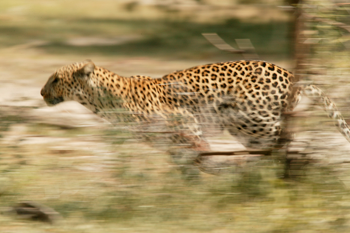 New Research Suggests Why Mid-Sized Animals Are The Fastest