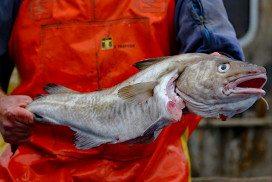 Man holding cod