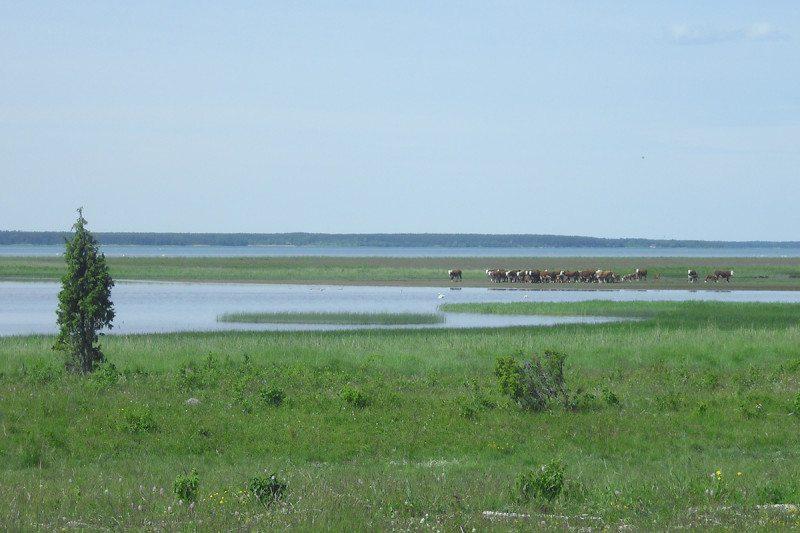 Restored alvar grassland