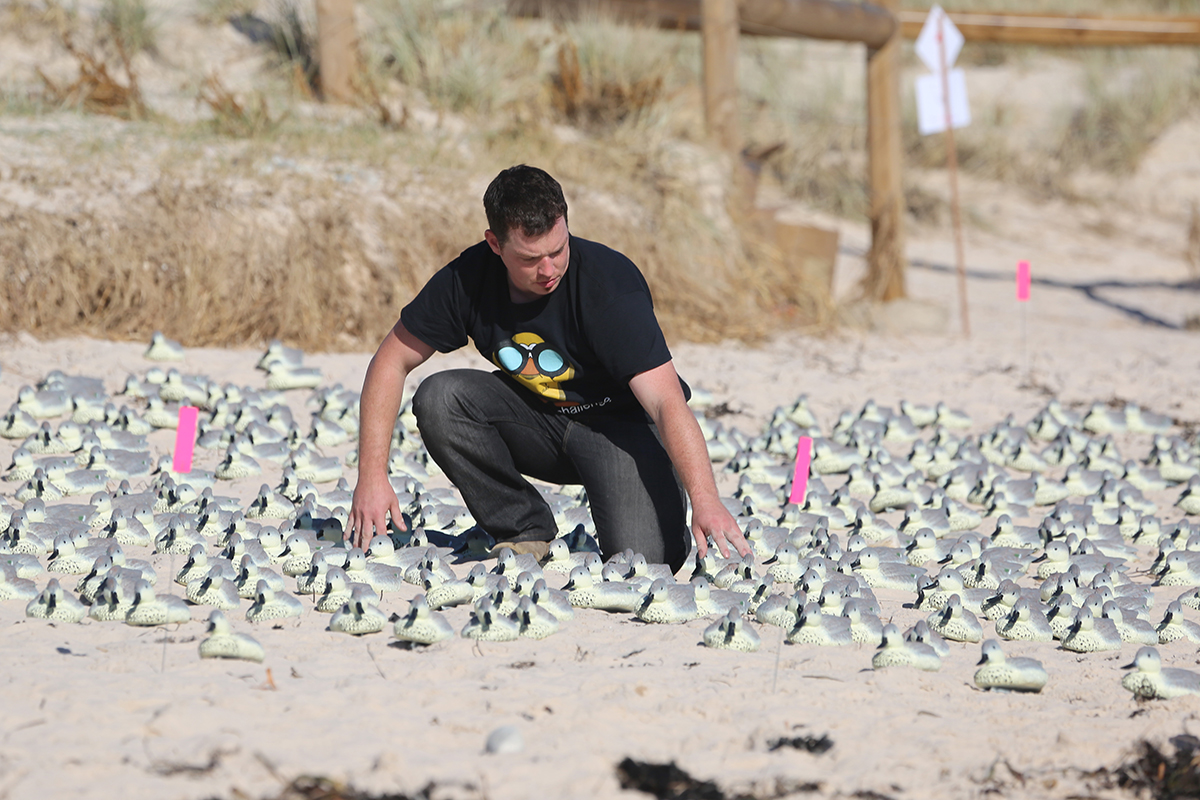 Fake duck test shows drones and AI beat humans at bird census