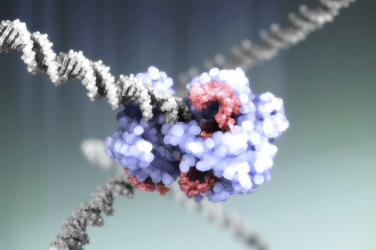 OHSU Scientist 1st In US To Modify Human Genes With CRISPR